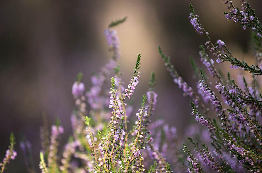 Hoe fotografeer je een bijzondere sfeer in de natuur?