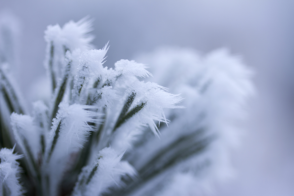 Winterfotografie tips - Karijn Fotografie -6427