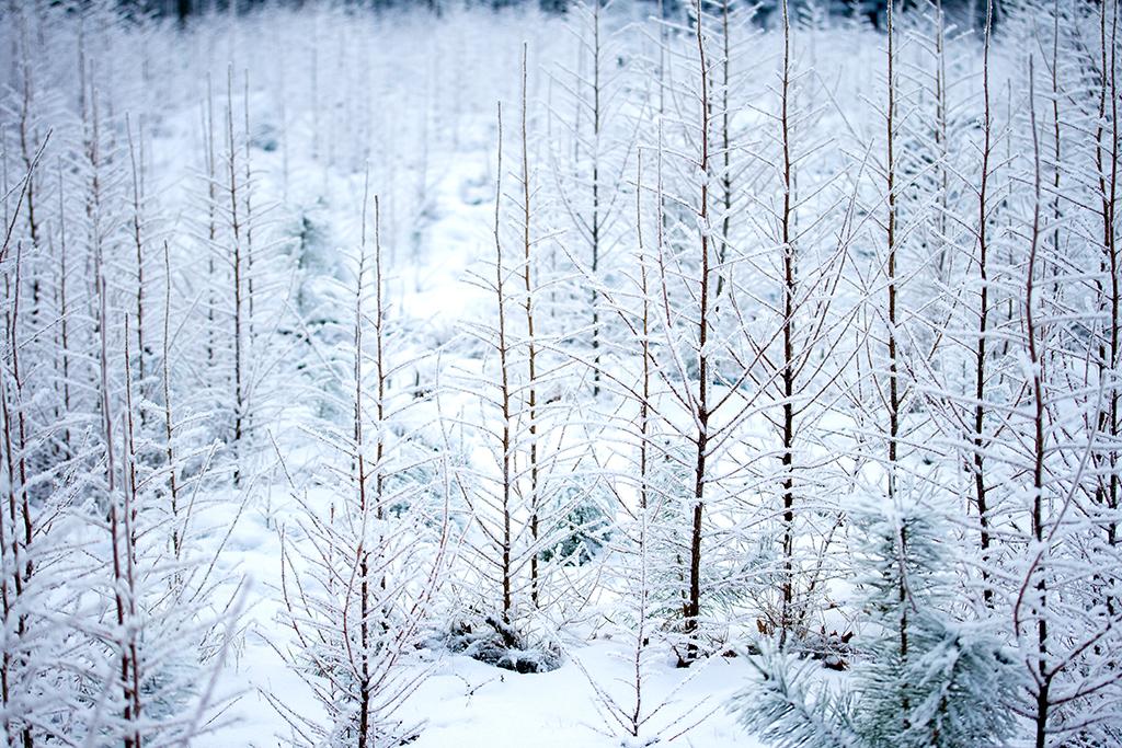 Winterfotografie tips - Karijn Fotografie -6593