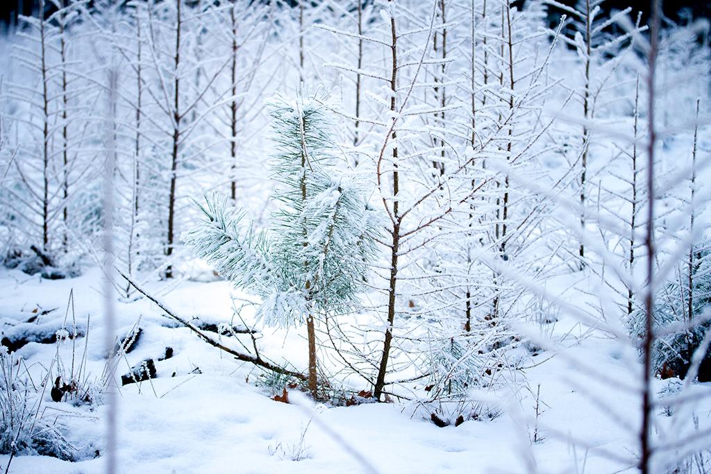 Winterfotografie tips - Karijn Fotografie -6594