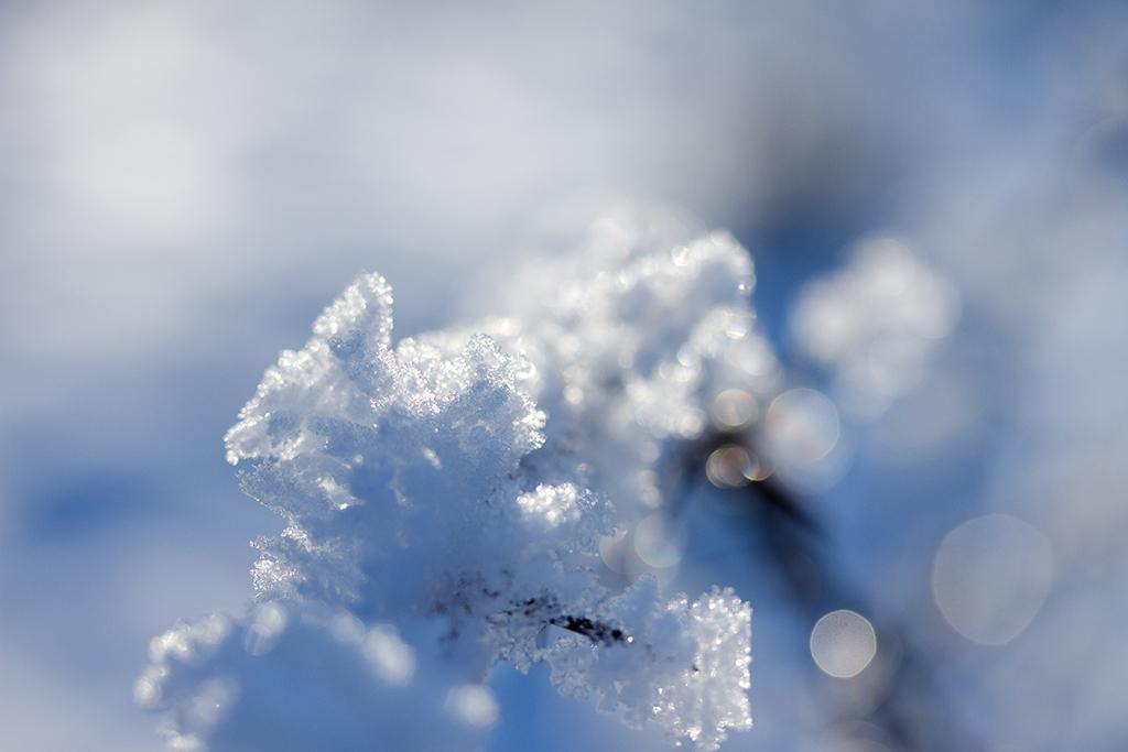 Winterfotografie tips - Karijn Fotografie -6657