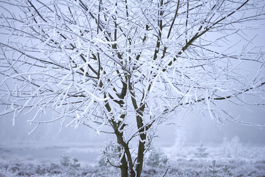 Winterfotografie tips - Karijn Fotografie