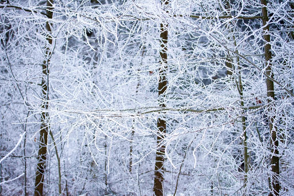 winter fotografie _ karijn fotografie -6269