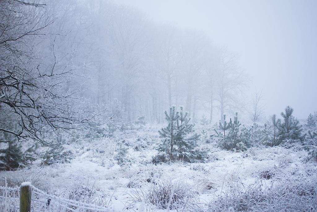 winter fotografie _ karijn fotografie -6282