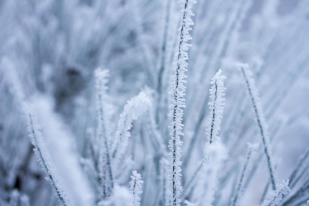 winter fotografie _ karijn fotografie -6339