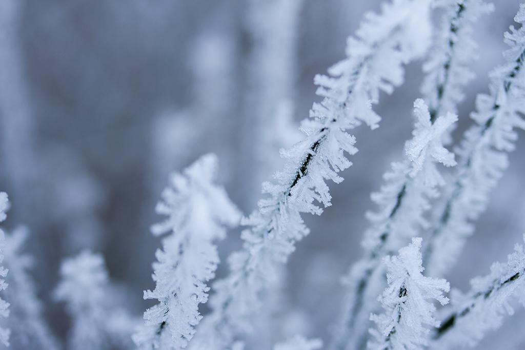 winter fotografie _ karijn fotografie -6340