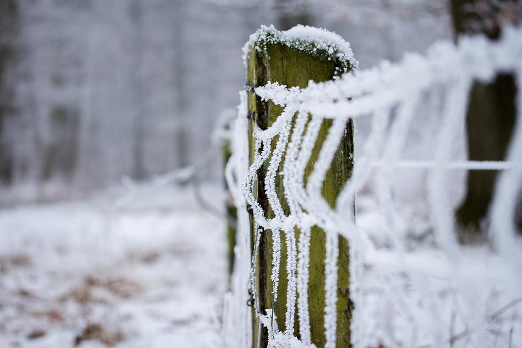 winter fotografie _ karijn fotografie -6361