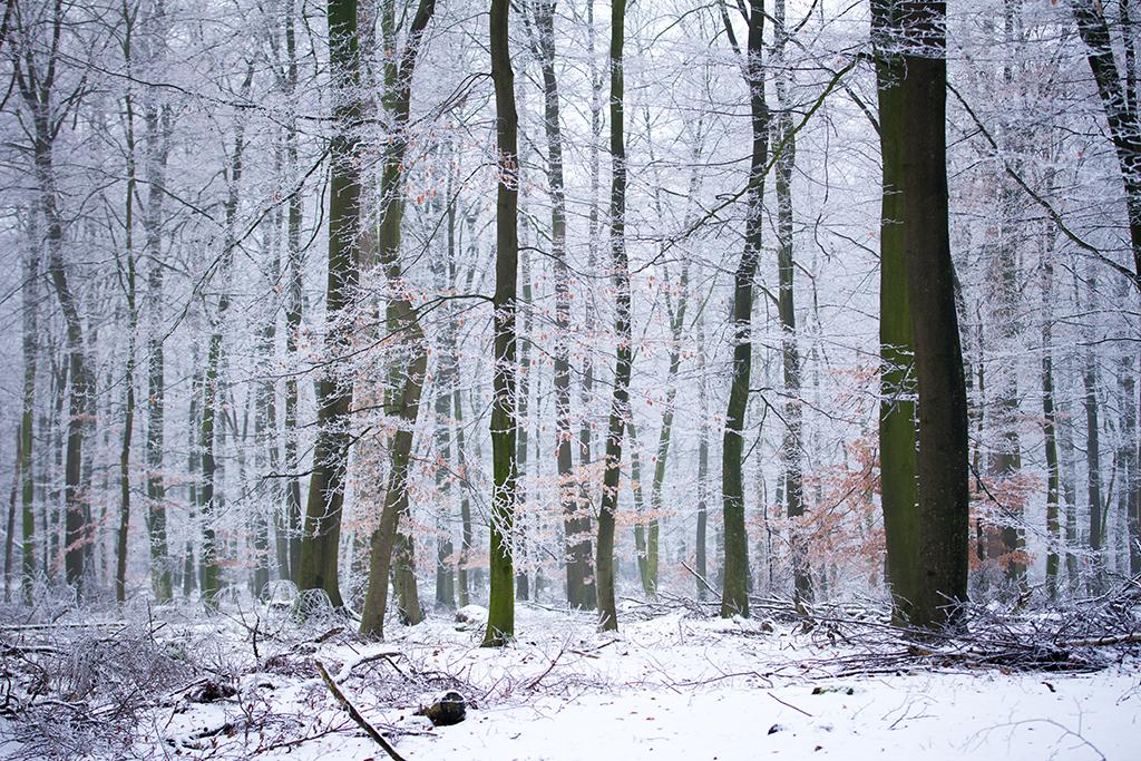 winter fotografie _ karijn fotografie -6367