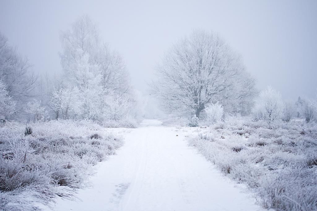 winter fotografie _ karijn fotografie -6372