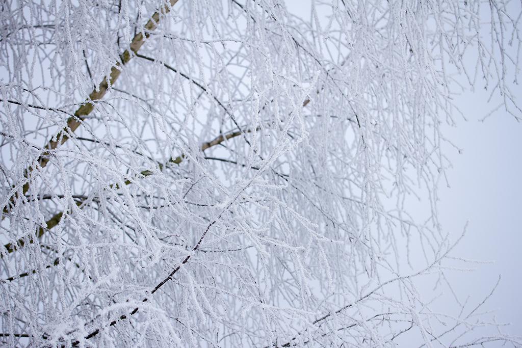 winter fotografie _ karijn fotografie -6397
