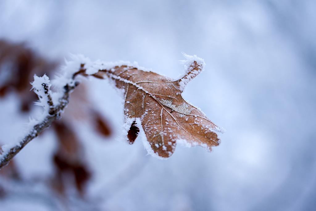 winter fotografie _ karijn fotografie -6437