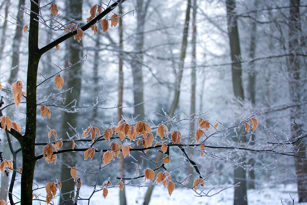 winter fotografie _ karijn fotografie -6455