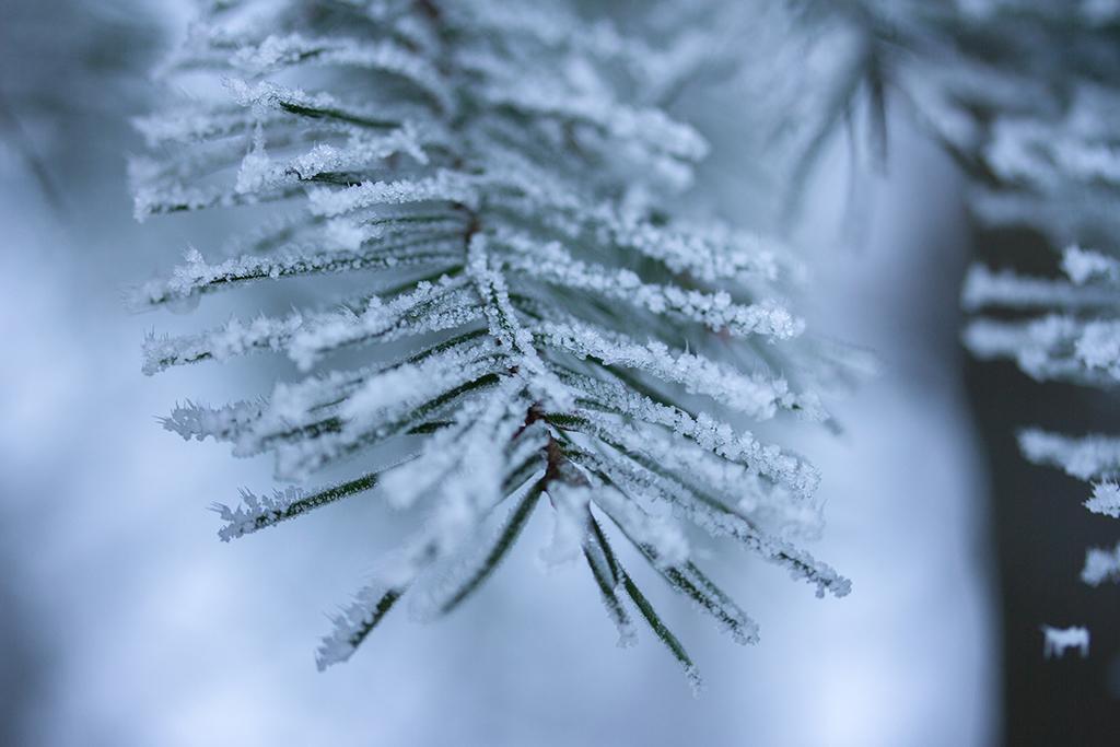 winter fotografie _ karijn fotografie -6464