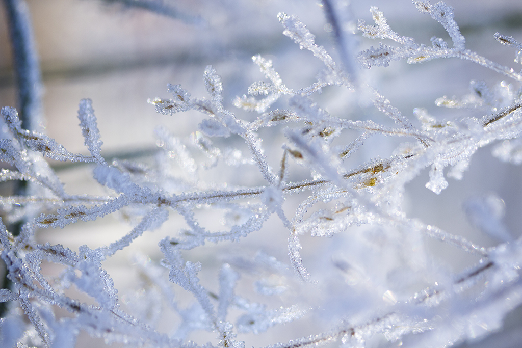 winter rijp- karijn fotografie