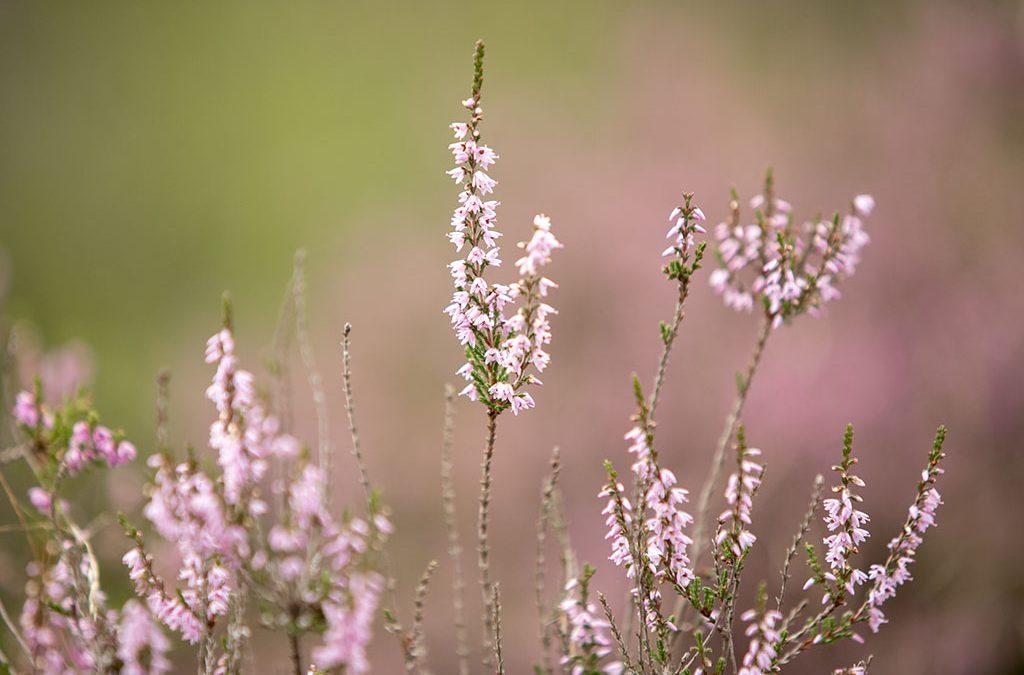 10 Fotografietips voor bloemen.